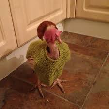 Chicken Sweater Pattern