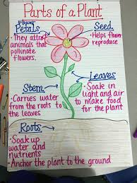 Parts Of A Plant Anchor Chart Teaching Plants Plants
