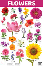 Flower Chart In English Buy Flowers Book Online At Low Prices In India Flowers