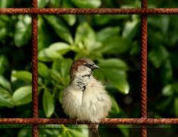 framing photography. Natural Framing By Thrumyeye Photography