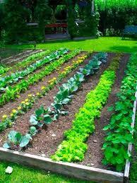 Small Picture Vegetable Garden Design Ideas Markcastroco