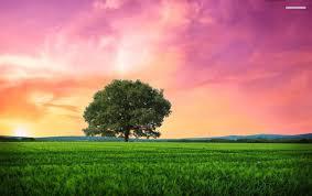 grass field sunrise. Interesting Sunrise OriginalWide Pink Sunrise Tree Grass Field Wallpapers To