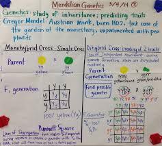 Mendelian Genetics Chart Mendelian Genetics Punnett Squares Biology Glad Anchor Chart