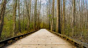 outdoors. Free Images : Landscape, Tree, Nature, Forest, Path, Pathway, Outdoor, Wilderness, Branch, Sky, Boardwalk, Board, Wood, Trail, Bridge, Sunlight, Leaf, Outdoors
