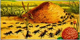 ants in the garden benefits of ants