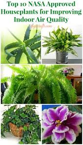 Top 10 NASA Approved Houseplants for Improving Indoor Air Quality  Page 2.
