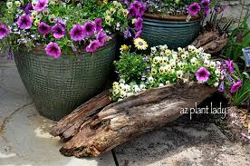 view in gallery colorful flowers planted in a log diy old log flower planters for a colorful garden