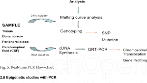 Figure 5 From Pcr Rflp And Real Time Pcr Techniques In
