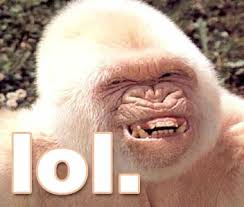 lol lol lol  Images?q=tbn:ANd9GcSmM6SaO1urijHse2yveuOSMpKEWrllT9zXGt4B2Y-k8EHQOyDZAw