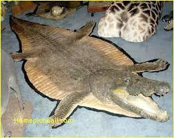 real animal hide rugs info skin south africa faux ogesico real animal skin rugs
