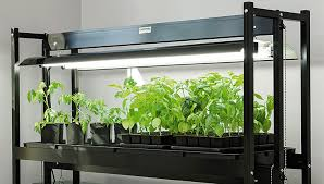 How to Choose an <b>LED Grow Light</b> | Gardener's Supply