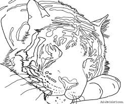 Small Picture Tiger Coloring Pages Powerful Pussycats