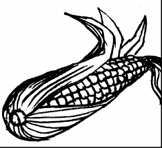 Small Picture Corn Cob Coloring Pages And On The Page creativemoveme