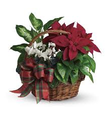 teleflora s holiday homeing basket a living holiday gift
