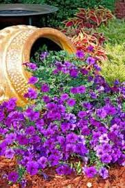 Small Picture Planting inspiration with cascading flowers out of tipped over urn