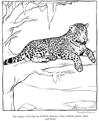 Free Printable Coloring Pages For Kids Zoo Coloring Pages For