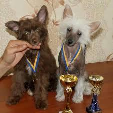 Архив Щенки с большой перспективой имеют награды дипломы медали  щенки с большой перспективой имеют награды дипломы медали кубки КСУ Черкассы изображение
