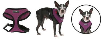Product Review Puppia Soft Harness Dogtime