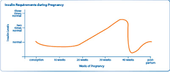 Type 1 Diabetes And Pregnancy Medtronic Hcp Portal
