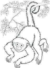 Monkey Coloring Pages Free Printable Monkey Coloring Page Free