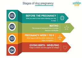 Stages Of Dog Pregnancy Week By Week With Photos