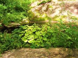 Small Picture The Woodland Garden Natural Landscaping Gardening and
