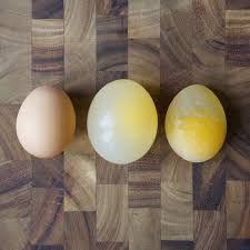 3 Insanely Cool Egg Experiments - Playdough To Plato