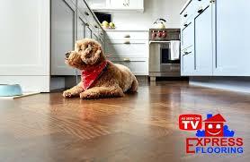best laminate wood flooring for pets best flooring for pet owners best laminate wood flooring for best laminate wood flooring for pets