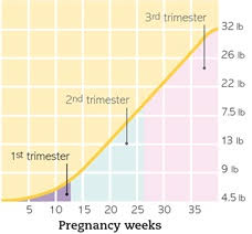 Pregnancy Weight Chart Weight Gain During Pregnancy The Chart On Babys Growth