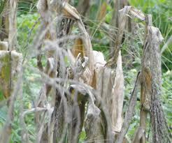 Image result for drought in kenya