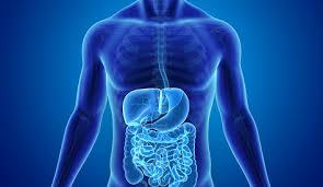 Gastroenterology The Metrohealth System