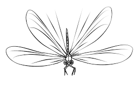 Small Picture FREE Dragonfly Coloring Page 16