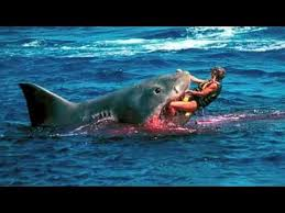 pictures of great white sharks eating people. Modren Pictures CNN  White Shark Eats Living Human Intended Pictures Of Great Sharks Eating People YouTube