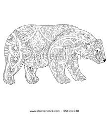 Small Picture Vector Zentangle Polar Bear Head Adult Stock Vector 551139238