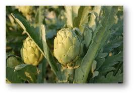Resultado de imagen de dia de la alcachofa en la vega baja
