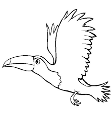 Small Picture Flying Toucan Coloring Page Flying Toucan Coloring Page