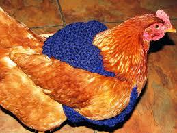Chicken Sweater Pattern Impressive Creative Crochet By Becky Crochet Chicken Sweaters Pattern And
