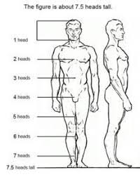Human Proportions Chart 7 Figure Drawing Proportions To Know