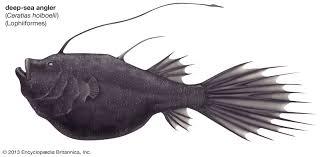 Deep Sea Fish Marine Biology Britannica