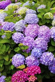 Vasi per fiori recisi: . . .