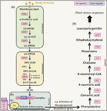 Differential Gene Expression Analysis in Polygonum minus Leaf ...