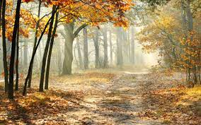 Autumn Forest Wallpapers on WallpaperSafari