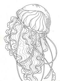 jellyfish coloring pages for s