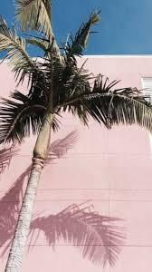 palm trees tumblr. 5 Palm Trees Tumblr N