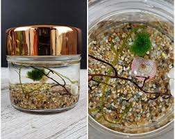 diy office gifts. Nano Marimo Moss Ball Terrarium Overlook DIY Office Desk Accessory Fall  Autumn Gift Halloween Home Decor Personalized Gifts Diy Office Gifts L