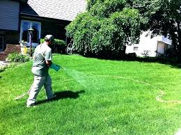 Image For Lawns Best Weed Control For Lawns Musement Co