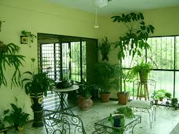 Indoor Plants Living Room Create Your Own Tapestry Of Greenery Decorating With Plants