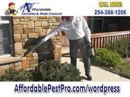 pest control killeen tx. Plain Control Affordable Pest Pro  Control Killeen Texas Throughout Tx T
