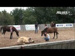 Humanship Horsemanship with Ian Benson & Anke Benson - YouTube