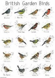 Details About A4 British Garden Birds Chart Print Poster Nature Bird Wildlife